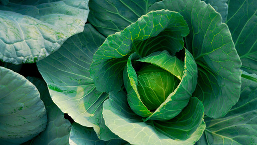 1130200253-Cabbage.jpg