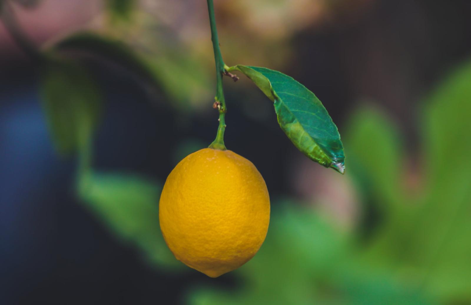 Lemon image.png