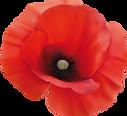 Elliot-Cortbett-RII-Poppy-Flower-01.png