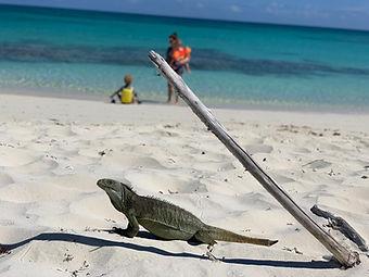 iguana island turks and caicos