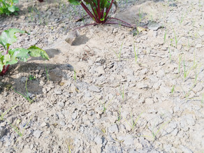 What can adding wood ash do to enhance soil fertility and plant growth?