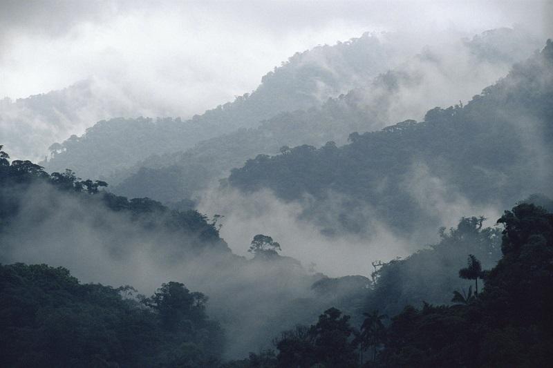 171212-neblina-frio-800x533-atiempo.mx_