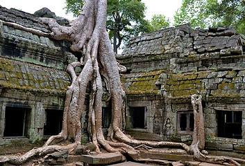Cambodia-Angkor-Park-Ta-Prohm-Famous-Spung-Tree.jpg