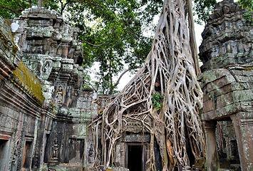 Cambodia-Angkor-Park-Ta-Prohm-Jungle-Temple.jpg