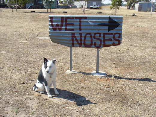 Wet Noses Kennels