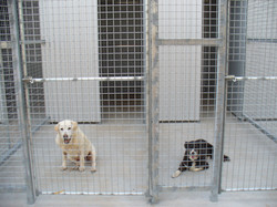 dogs and kennels 044.JPG
