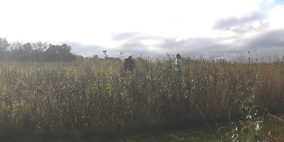 National Public Lands Day - Prairie Seed Harvesting