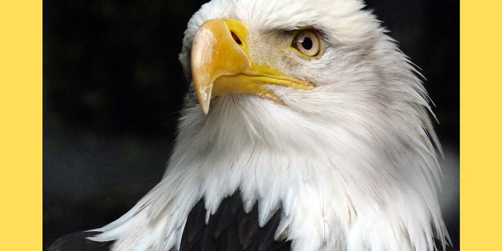 Nature Kids - Eagles