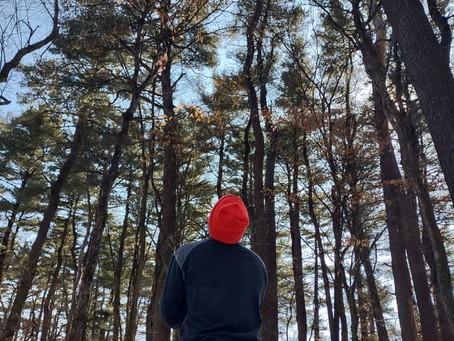 The Why of Iowa's White Pines
