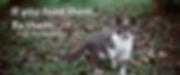 feral-cats.webp