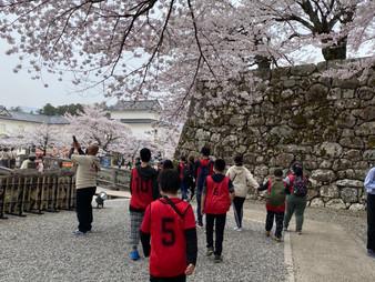 🌸彦根城に行ってきました🌸