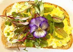 Gilberties microgreen egg sandwich