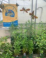 pollinators_edited.jpg