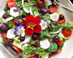 Gilberties microgreen salad
