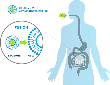 How Liposomes work