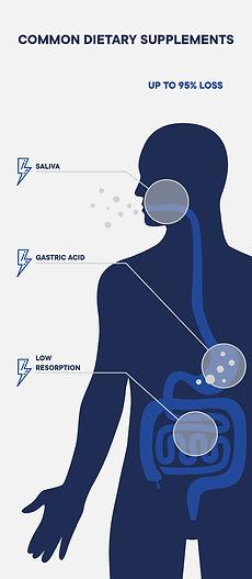 200917_Digestion_Infografik_MB-06-05_edi