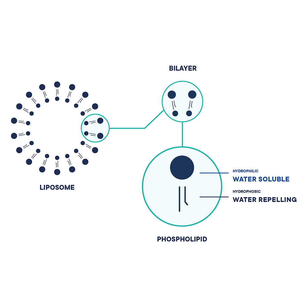 What are liposomes