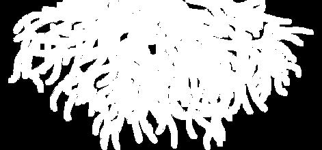 unnamed%252520(1)_edited_edited_edited.p