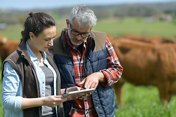 Cattle Tracking Software