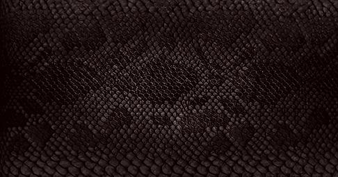 snake-skin.png