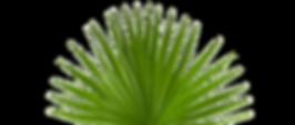 hazel-plant2_edited.png