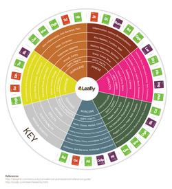 Terpene Infograph