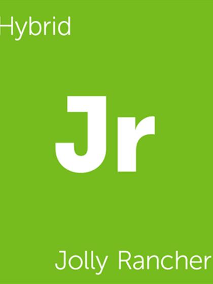 Joly Rancher Terpenes