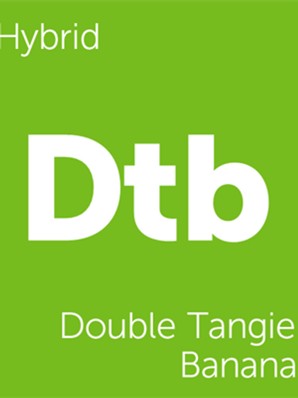 Double Tangie Banana