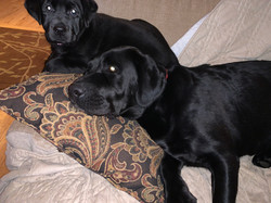 Daisy and Ace