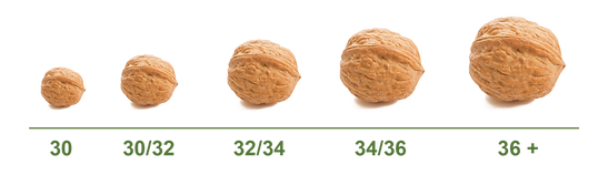 Walnuts-02.png