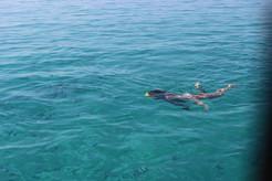 Nuotare con i pesci