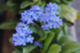 flowers3_blue.jpg