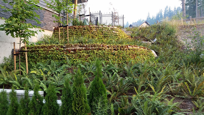 Terraced Garden (2).jpg