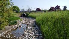 Sophia Creek