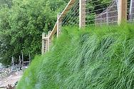 Vegetated Walls.JPG