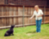 Distinctive Dog Training - Keller, Texas