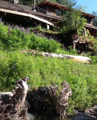 Riverbank Restoration After.jpg