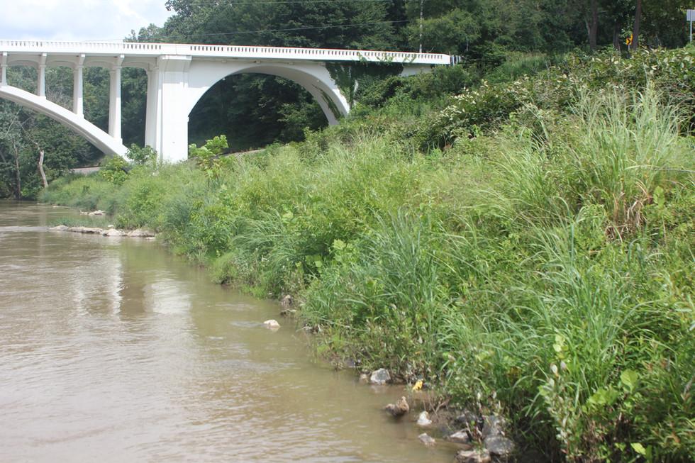 French Broad River (8).JPG
