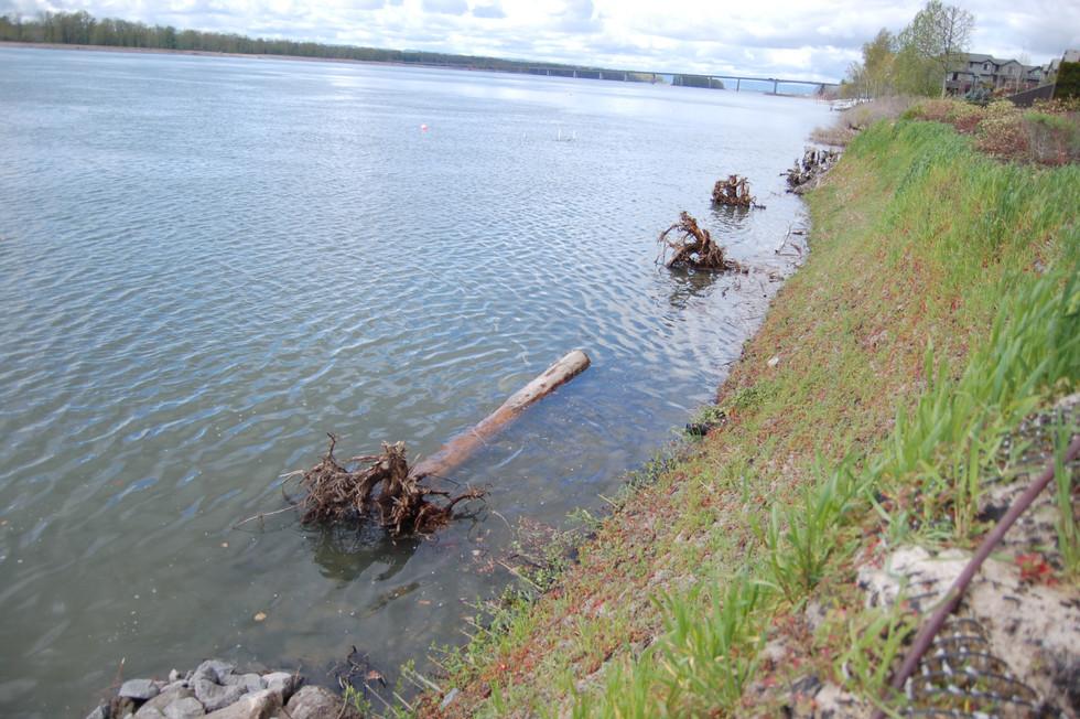 Columbia River (8).JPG