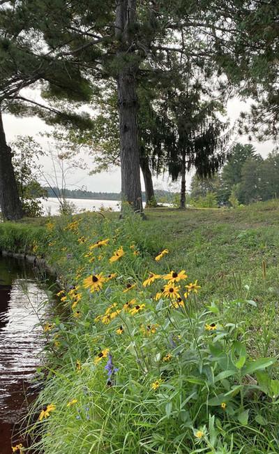 Shoreline Restoration.jpg