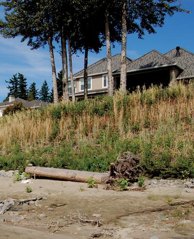 Columbia River Restoration.jpg