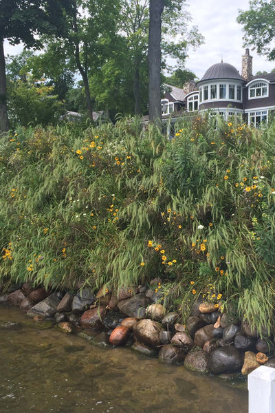 Shoreline Restoration Vegetated.jpg