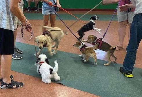 Puppy 1 dogs greeting (2).jpg