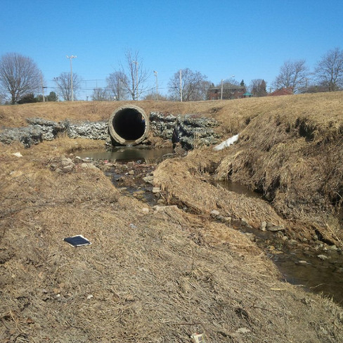 Sophia Creek (1).jpg
