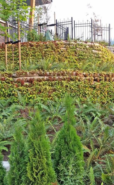 Vegetated Terrace (After).jpg