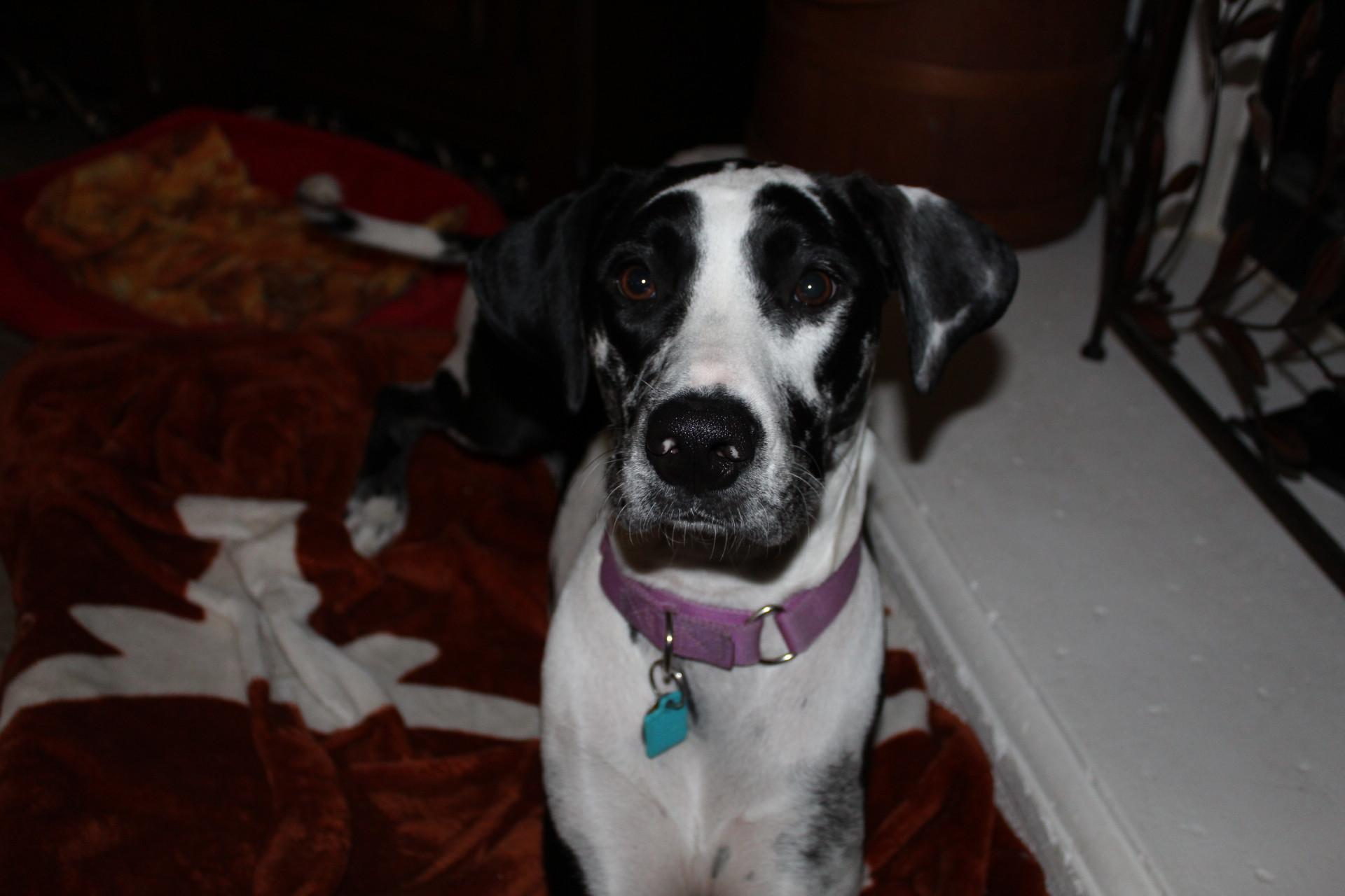 House Sitting: Additional Dog