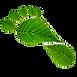 Green%20footprint%2C%20eco%20concept_edi