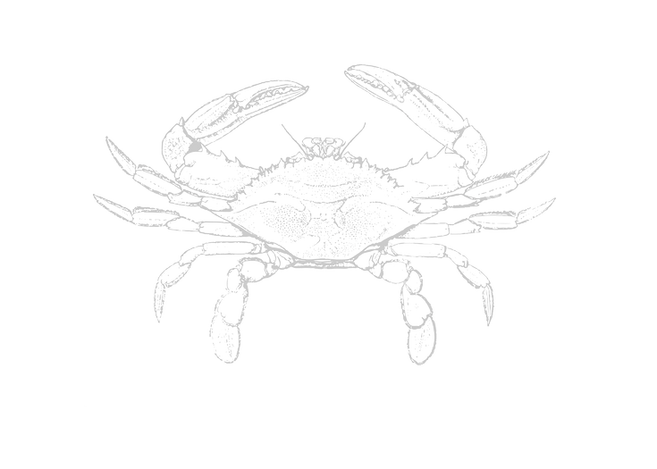 crab_edited_edited.png