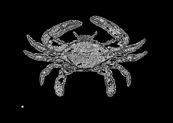 crab_edited.png