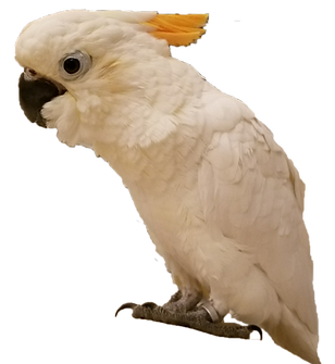 Exotic Birds & Parrots for Sale | Rochester, NY | Exotic Pet Birds Inc